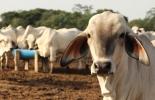 Ganadería, ganadería colombia, noticias ganaderas, noticias ganaderas colombia, CONtexto ganadero, precio del ganado, investing, andy hecht, precio del ganado a nivel mundial, precio de la soja, precio de la soja en el mercado internacional, comportamiento precio del ganado