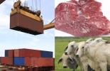 colombia, exportaciones de carne, exportaciones de carne y animales en pie 2020, top 5 de países compradores de carne colombiana, ganadería, noticias ganaderas, CONtexto ganadero