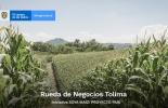 Colombia, maíz, Tolima, segunda rueda de negocios del maíz, Juan Gonzalo Botero, estrategia 'SOYA MAÍZ: Proyecto País', ganadería, ganadería Colombia, noticias ganaderas, noticias ganaderas Colombia, CONtexto ganadero