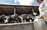 insumos, insumos ganadería, insumos lechería, insumos ganadería primer trimestre 2021, concentrados, sector pecuario, fungicidas, insecticidas, herbicidas, coadyuvantes, medicamentos, alimentos balanceados, suplementos, enzimas, aditivos, antisépticos, desinfectantes, antibióticos, ganaderos, ganaderos colombia, ganado, vacas, vacas Colombia, bovinos, Ganadería, ganadería colombia, noticias ganaderas, noticias ganaderas colombia, CONtexto ganadero, contextoganadero