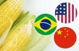 Precio maíz 2021, precio maíz abril 2021, maíz, soya, carne de pollo, concentrados, alimentos balanceados, precio maíz Colombia, Costos de Producción, lechería, materias primas, USDA, estados unidos, Verano, demanda, dólar, mercados internacionales, ganaderos, ganaderos colombia, ganado, vacas, vacas Colombia, bovinos, Ganadería, ganadería colombia, noticias ganaderas, noticias ganaderas colombia, CONtexto ganadero, contextoganadero