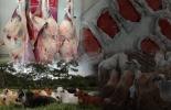 laboratorio, calidad, carne, Agrosavia, terneza, frigoríficos, restaurantes, investigación, consumidores, corte, Lomo, Chatas, cavas, bolsas refrigerantes, sacrificio, empaque, maduración, muestras, temperatura, pH, grasa, transporte, Cadena cárnica, estrés, lesiones, Hematomas, Ganadería, ganadería colombia, noticias ganaderas colombia, CONtexto ganadero