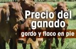 precio del ganado, subastas, contexto ganadero