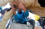 Comité de paro, bloqueos, Vandalismo, obstrucción de vías, quema de llantas y amenazas de delincuentes encapuchados, leche, lechería, acopio, leche represada en fincas, vacas, vacas Colombia, lechería, bovinos, ganadería bovina, ganadería bovina Colombia, noticias ganaderas, noticias ganaderas Colombia, contextoganadero