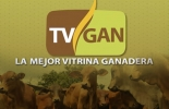 TVGAN, promociones, medicamentos, Ciclo de Vacunación, instrumentos, vitaminizantes, desparasitantes, agujas, jeringas, marcaje, Ganadería, ganadería colombia, noticias ganaderas colombia, CONtexto ganadero