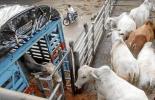 Paro Nacional 2021, paro Friogán, bloqueos vías Friogán, Friogán, Frigoríficos Ganaderos de Colombia, camiones para transportar ganado, pérdidas Friogán paro nacional 2021, paro nacional mayo 2021, paro Colombia 2021, pérdidas paro, ganaderos, ganaderos colombia, ganado, vacas, vacas Colombia, bovinos, ganado bovino, Ganadería, ganadería colombia, noticias ganaderas, noticias ganaderas colombia, CONtexto ganadero, contextoganadero