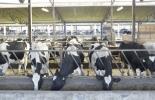 Problema de la leche en Colombia, los problemas del sector lechero, el problema de la leche, lecheros Colombia, problemas en el sector lácteo, problemas actuales de la lechería, falta de bienestar animal, alojamiento inadecuado, ganado bovino, ganadería bovina, carne, leche, ganaderos, ganaderos colombia, ganado, vacas, vacas Colombia, bovinos, Ganadería, ganadería colombia, noticias ganaderas, noticias ganaderas colombia, CONtexto ganadero, contextoganadero