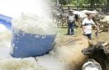 Salvaguardia, Fedegán, leche, leche en polvo, leche de bovino, importaciones de leche en polvo, vacas, vacas Colombia, lechería, bovinos, ganadería bovina, ganadería bovina Colombia, noticias ganaderas, noticias ganaderas Colombia, contextoganadero