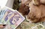 Actualización pago leche octubre 2021, cartilla informativa pago leche Colombia, valor proteína leche Colombia 2021, valor grasa leche Colombia 2021, valor sólidos totales leche Colombia 2021, Pago leche bonificaciones, precio litro de leche colombia, Producción de leche en Colombia, Precio leche octubre 2021, aumento precio leche octubre 2021, Resolución 290 de 2021, bonificaciones pago leche en Colombia, ganado bovino, ganadería bovina, carne, leche, ganaderos, ganaderos colombia, ganado, vacas, vacas Col