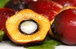 Fruto de aceite de palma