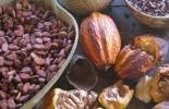 Precio internacional del cacao subió en noviembre