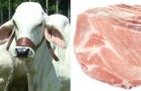 Exportación ganado y carne Colombia