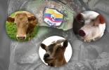 Inventario de las Farc animales