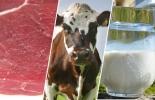 Importaciones carne animales vivos y leche