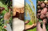 Sectores productivos del campo colombiano