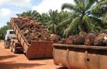 Pérdidas económicas por paro agrario palmicultores.