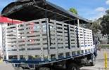 Restricción de carga pesada