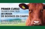 Curso de cirugía en bovinos, transferencia de conocimiento, medicina interna, fincas ganaderas, médicos veterinarios, cirugía en campo,