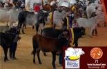 Asocebú,  71 Feria Nacional Cebú, Bucaramanga  71 Feria Nacional Cebú, XlX Congreso Mundial Brahman, Ganadería, ganadería Colombia, noticias ganaderas, noticias ganaderas Colombia, Contexto ganadero