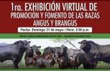 1era exhibición virtual de promoción y fomento de las razas Angus & Brangus, Charlas virtuales Asociación Angus & Brangus 2020, AsoAngusBrangus 2020, día de campo Angus, día de campo brangus, noticias Angus Colombia, noticias Brangus Colombia, información Brangus Colombia, Asociación Angus & Brangus, coronavirus, COVID-19, cuarentena, Ganadería, ganadería colombia, noticias ganaderas, noticias ganaderas colombia, CONtexto ganadero