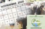Eventos ganaderos noviembre 2020, 38 congreso ganaderos, Eventos ganaderos 2020, remates de ganado 2020, Ferias Ganaderas, ferias ganaderas colombia, subastas, inicio 2020, octubre 2020, Venta de ganado, subastas ganaderas, bovinos, vacas, eventos bovinos Colombia, ganado bovino, ganadería bovina, Ganadería, ganadería colombia, noticias ganaderas, noticias ganaderas colombia, CONtexto ganadero, contextoganadero