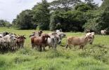 ganadería, ganadería colombia, noticias ganaderas, noticias ganaderas colombia, contexto ganadero, ganadería colombiana sostenible, ganadería sostenible, cambio climático, conversatorio cambio climático, mitigación cambio climático
