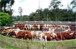 Día de campo refuerza la asociatividad en Cundinamarca.