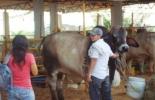 Feria de leche y carne