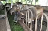 Foro 'Hacia el desarrollo sostenible de la ganadería empresarial en la altillanura colombiana'
