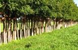 Proyecto Ganadería Colombiana Sostenible