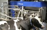Tecnología en ganadería, tecnología en el campo, ordeño robotizado, emprendimiento en ganadería, drones en ganadería, tecnología sector rural, empresa ganadera, emprendimiento en ganadería, Ganadería colombiana, CONtexto ganadero, ganaderos colombia, noticias ganaderas colombia