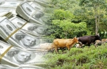 Fondo Colombia Sostenible, donaciones, proyectos sostenibles, proyectos silvopastoriles, agroforestales, productividad en fincas ganaderas, sostenibilidad ambiental, restauración de áreas degradadas, asociatividad, pequeños ganaderos, CONtexto ganadero, noticias de ganadería colombiana.