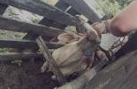 Colombia, odontología, odontología para animales, bovinos, caballos, tratamiento odontológicos para animales, genprogan, Ganadería, ganadería colombiana, noticias ganaderas, noticias ganaderas Colombia, CONtexto ganadero