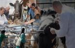Ganadería, ganadería colombia, noticias ganaderas, noticias ganaderas colombia, CONtexto ganadero, Organización de las Naciones Unidad para la Alimentación y la Agricultura, Organización Mundial de la Sanidad Animal, Organización Mundial de la Salud, patologías de los animales, bienestar animal, trazabilidad, producción, inocuidad, Alejandro córdova izquierdo, engormix, veterinario y salud, salud en ganadería,