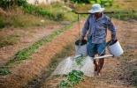Ganadería, Ganadería colombiana, agricultura, Agricultura Colombia, CONtexto ganadero, noticias ganaderas, noticias ganaderas colombia, agricultor antes que ganadero, ganaderos, ganaderos colombia, aprenda del suelo, manejo del suelo, tiempos de descanso, pasto como cultivo, cultivar pasto