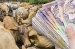 recursos parafiscales, parafiscalidad ganadera, administrador de la parafiscalidad ganadera, FNG, Fondo Nacional del Ganado, Fedegán, CONtexto ganadero, ganaderos colombia, noticias ganaderas colombia,