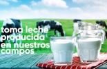 Fondo Nacional del Ganado, fomento al consumo de leche Fedegán-FNG, Agroexpo 2019, quiosco del FNG, CONtexto ganadero, noticias ganaderas de colombia, leche, vacas