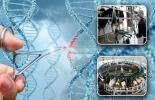 """automatización, edición génica, futuro, ganadería, edición génica (EG), producción sustentable, predictividad, ambientes extremos, genoma de los animales, alelos, genes, rasgos deseables de otras razas, Aníbal Pordomingo, coordinador del programa Carnes y Fibras del INTA¸ comederos inteligentes, modificaciones genéticas, monitoreos con drones, collares con GPS, chips subcutáneos, """"Data Mining"""", huella de carbono, """"Blockchain"""", innovaciones tecnológicas, ganadería del futuro, INTA, CONtexto ganadero, noticia"""