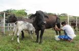 Buenas Prácticas Ganaderas, BPG, certificación de predios en BPG, sanidad animal, bioseguridad, registro de animales, Trazabilidad Animal