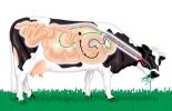 Composición leche estado ruminal, composición de la leche, grasa láctea, proteína láctea, ácidos grasos, pH del rumen, calidad composicional leche, estado del rumen, de grasa en leche, grasa de leche en vacas, producción de leche, CONtexto ganadero, ganaderos Colombia, noticias ganaderas Colombia