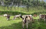 pacto por la ganadería sostenible, Proyecto Ganadería Colombiana Sostenible, Ganadería Sostenible, ganaderos sostenibles