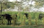 Somos semilla para una ganadería sostenible, Municipios ganaderos sostenibles, Proyecto Ganadería Colombiana Sostenible, Ganadería Sostenible, Territorios ganaderos sostenibles, proyecto ganadería colombiana sostenible