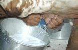5 puntos de fuga de la lechería, costos de la producción lechera, estructura del hato, reproducción de las vacas, eficiencia de la mano de obra