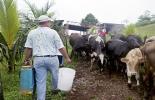 ganaderia, ganaderia colombia, ganaderia colombiana, contexto ganadero, noticias ganaderas, noticias ganaderas colombia, medio ambiente, acciones apoyo medio ambiente, reforestar, ganaderia medio ambiente, agricultura medio ambiente, ganaderos, ganaderos colombia