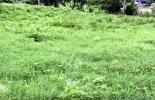 Punto óptimo de reposo, reconoce punto óptimo de reposo, pastoreo racional voisin, por, por ganadería, punto óptimo, reposo forraje, punto óptimo reposo paso, Suelo, pasto, bovino, punto óptimo reposo ganadería, Ganadería regenerativa, ganadería regenerativa Colombia, Asociación Colombiana de Criadores de Ganado Doble Propósito, Asodoble, CONtexto ganadero, ganaderos colombia, noticias ganaderas colombia