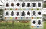 Ganadería, ganadería colombia, Ganadería colombiana, CONtexto ganadero, noticias ganaderas, noticias ganaderas colombia, escarabajos estercoleros, escarabajos del estiercol, Meta, escarabajos meta, ganaderos, ganaderos colombia