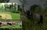 Ganadería Sostenible, ganadería sostenible Colombia, Ganadería regenerativa, ganadería amigable con el medio ambiente, Sistemas silvopastoriles, árboles ganadería, ganadería rentable y regenerativa, mejorar el suelo con ganadería, ahorrar costos en ganadería, costos bajos, ganadería regenerativa Colombia, Ganadería, sostenible, Colombia, CONtexto ganadero, ganaderos colombia, noticias ganaderas colombia
