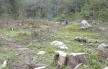 deforestación, La culpa no es de la vaca, Ganadería Sostenible, ganadería amigable con el medio ambiente, la ganadería no es responsable de la deforestación