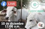 Ganadería, ganadería colombia, Ganadería colombiana, CONtexto ganadero, noticias ganaderas, noticias ganaderas colombia, embriogán, Genética Élite, facebook live contexto ganadero, ganaderos, ganaderos colombia