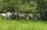 Ganadería, ganadería colombia, Ganadería colombiana, CONtexto ganadero, noticias ganaderas, noticias ganaderas colombia, fotosíntesis, fotositesis y ganaderia, relacion fotosintesis y ganaderia, dióxido de carbono, captura de carbono, pasturas, hojas, ganaderos, ganaderos colombia
